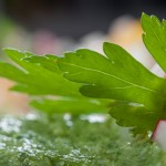 Зелена вълна – пастет от магданоз и коприва