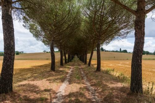 Località Montecchio del Loto 383, Arezzo, Tuscany