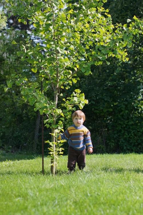 Даниел до дървото 2016