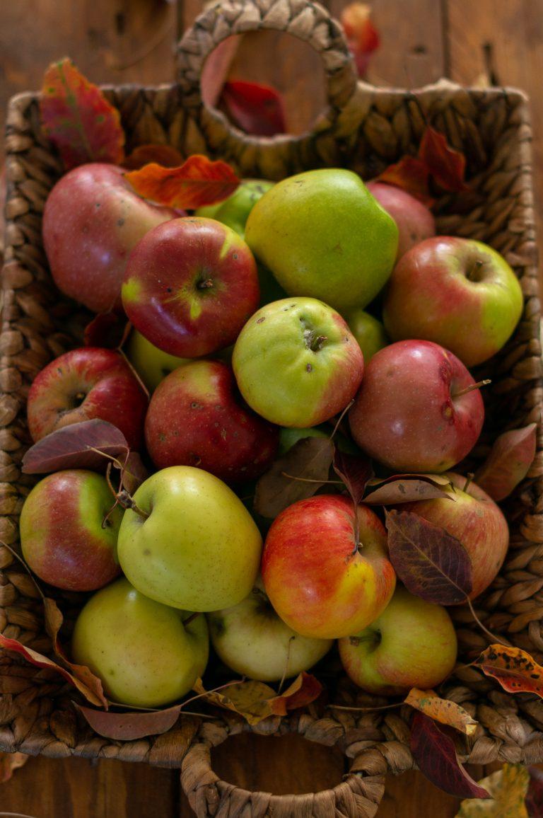 Различни сортове ябълки